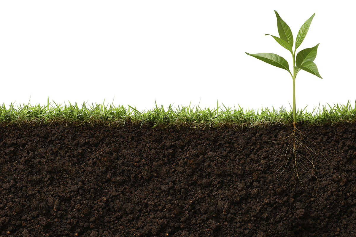 plant-root-growing