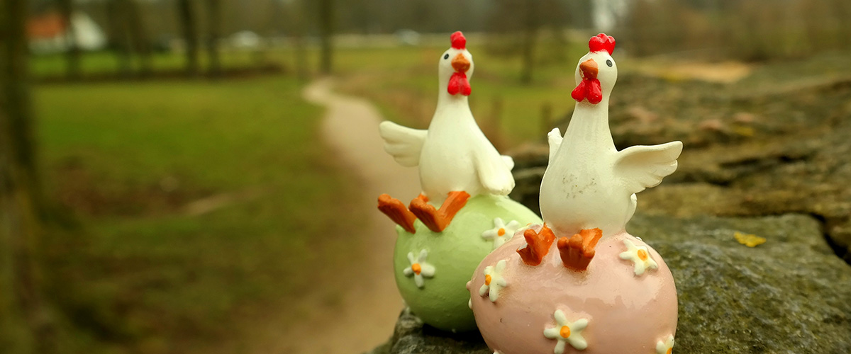 easter-chickens-1200x500px