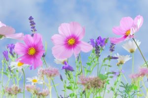 lavender2-1200x800px