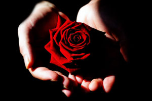 holding-single-rose-1200x800px