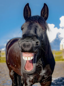 horse-laughing-1200x900px
