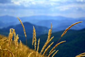 mountain-landscape-grasses